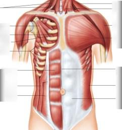 essentials of a p labeling muscles part 3 test diagram quizlet [ 855 x 1024 Pixel ]