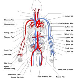 major arteries of the body [ 1024 x 908 Pixel ]