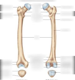 femur and patella [ 935 x 1024 Pixel ]