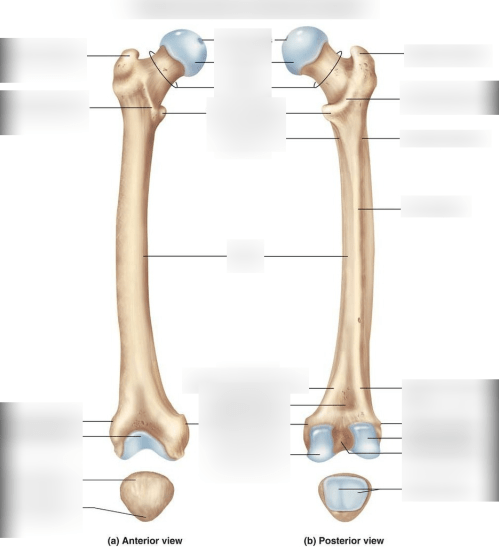 small resolution of femur and patella