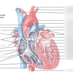 Interior Heart Diagram 4 Way Dimmer Switch Wiring Quizlet Location