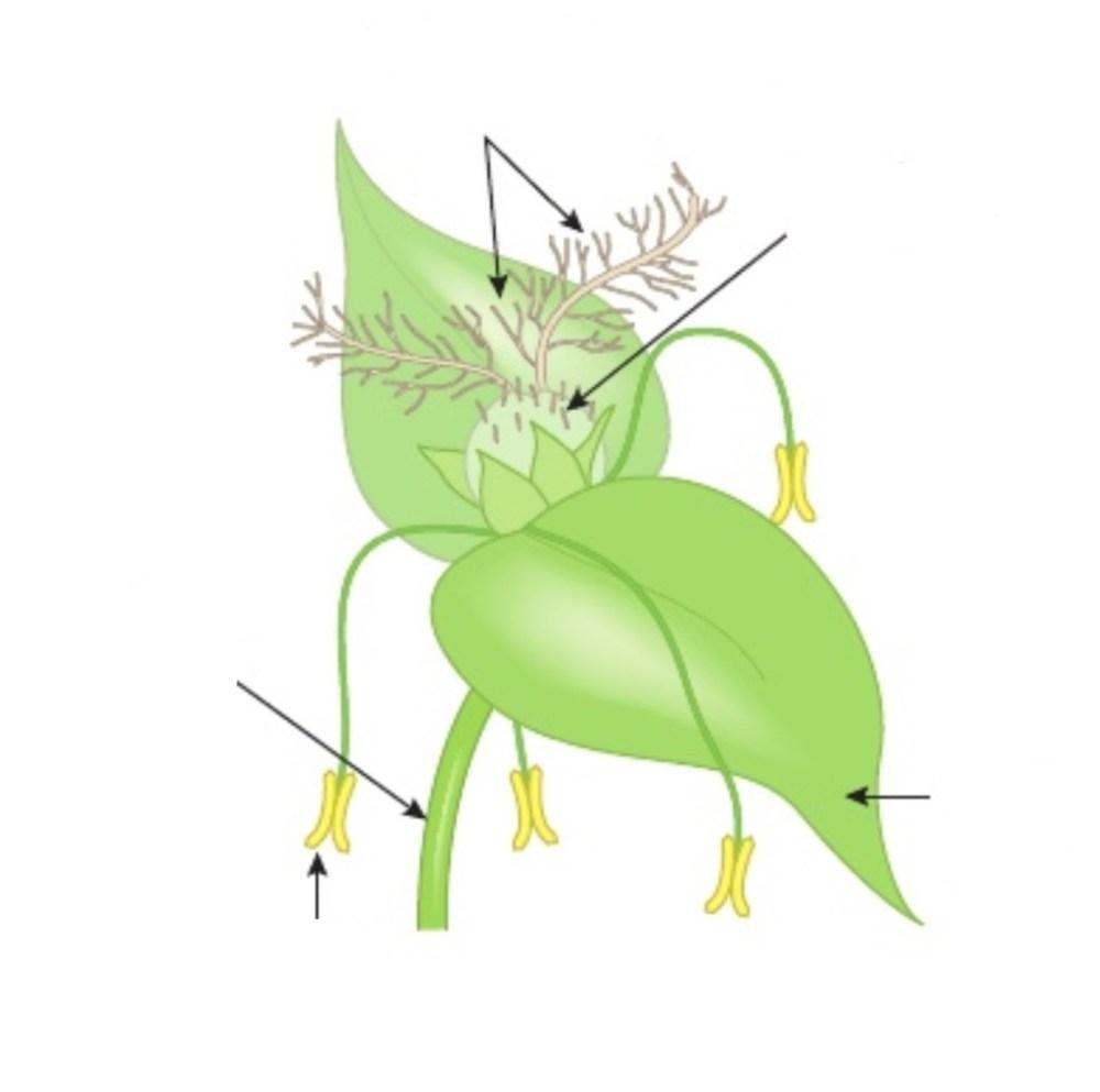 medium resolution of igcse biology diagrams flower wind pollinated no 1