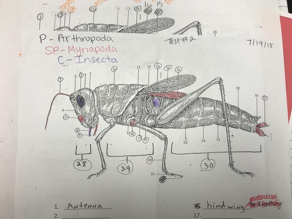 hight resolution of grasshopper pt 2