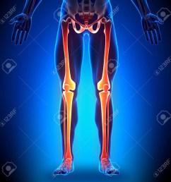 leg bone diagram [ 1024 x 1024 Pixel ]