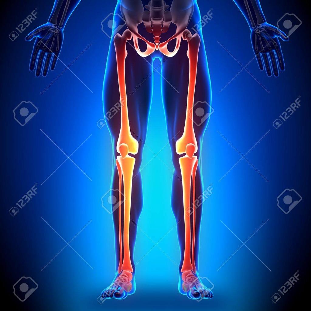 hight resolution of leg bone diagram