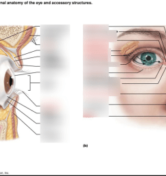 quiz 1 the eye and accessory structures 23 1 [ 1024 x 768 Pixel ]