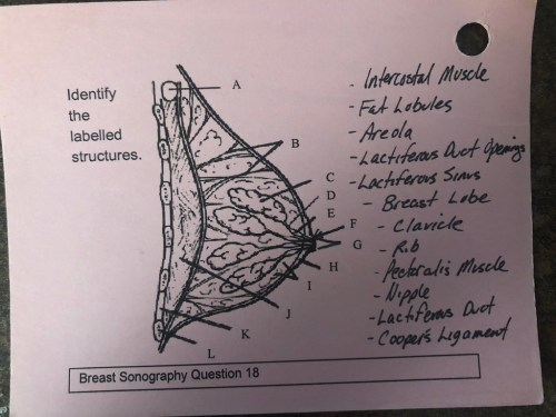 small resolution of axillary tail diagram