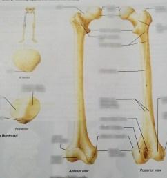 femur and patella [ 1024 x 907 Pixel ]