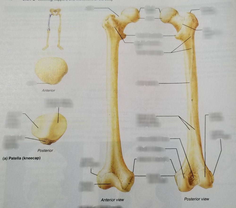 medium resolution of femur and patella