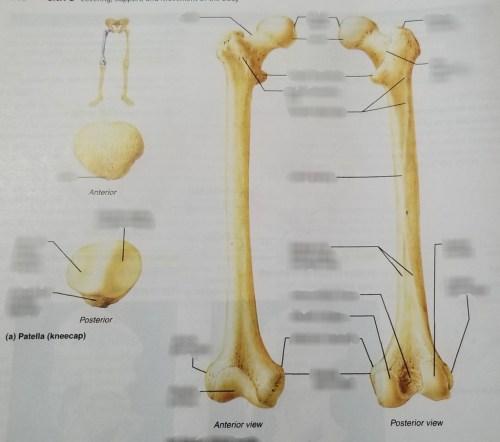 small resolution of diagram of a patella