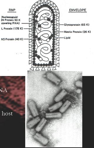 Study 615 Terms | Combo Set MFM Flashcards | Quizlet