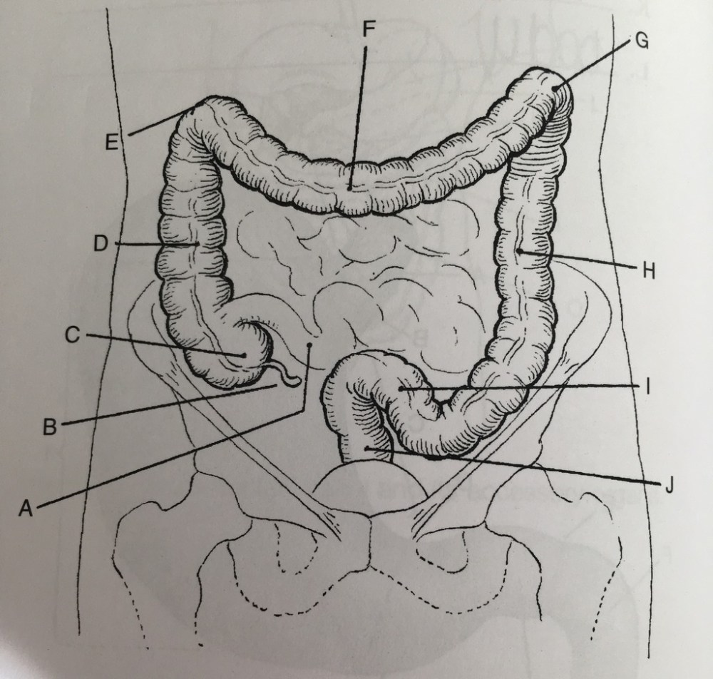 medium resolution of bowel diagram