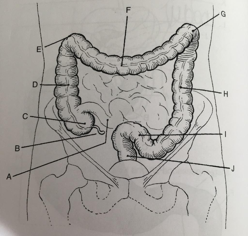 hight resolution of bowel diagram