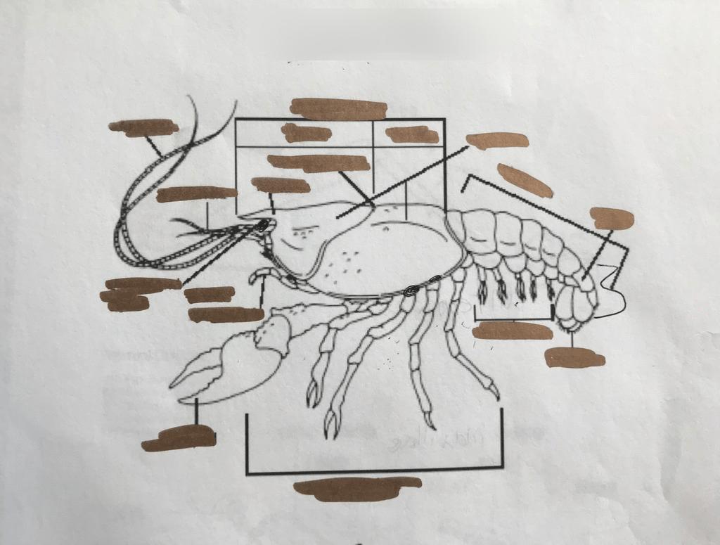 hight resolution of trevor crayfish labeling