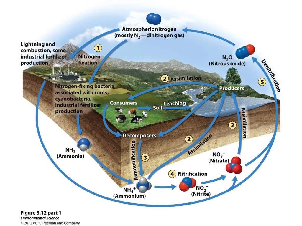 hight resolution of apes nitrogen cycle