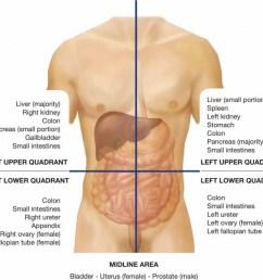 left ovary diagram [ 1024 x 921 Pixel ]