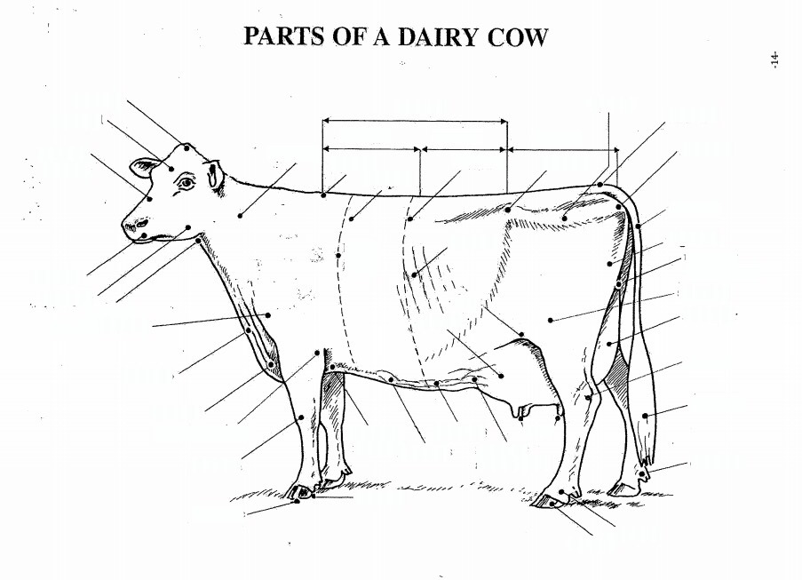 dairy cow parts diagram fleetwood bounder wiring 1 quizlet location