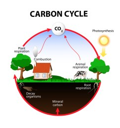 earth science the carbon cycle [ 1024 x 1024 Pixel ]