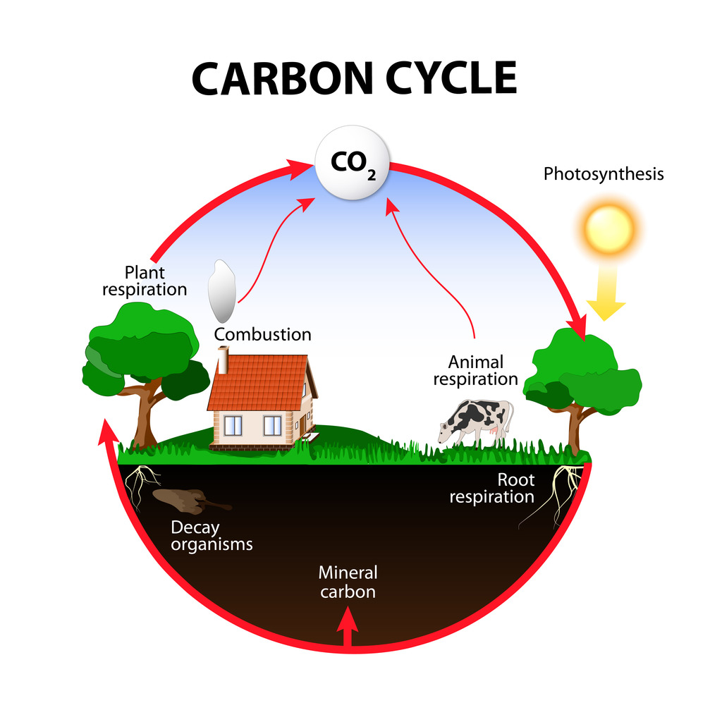hight resolution of earth science the carbon cycle