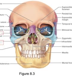 terms in this set 3 nasal bone  [ 1024 x 809 Pixel ]