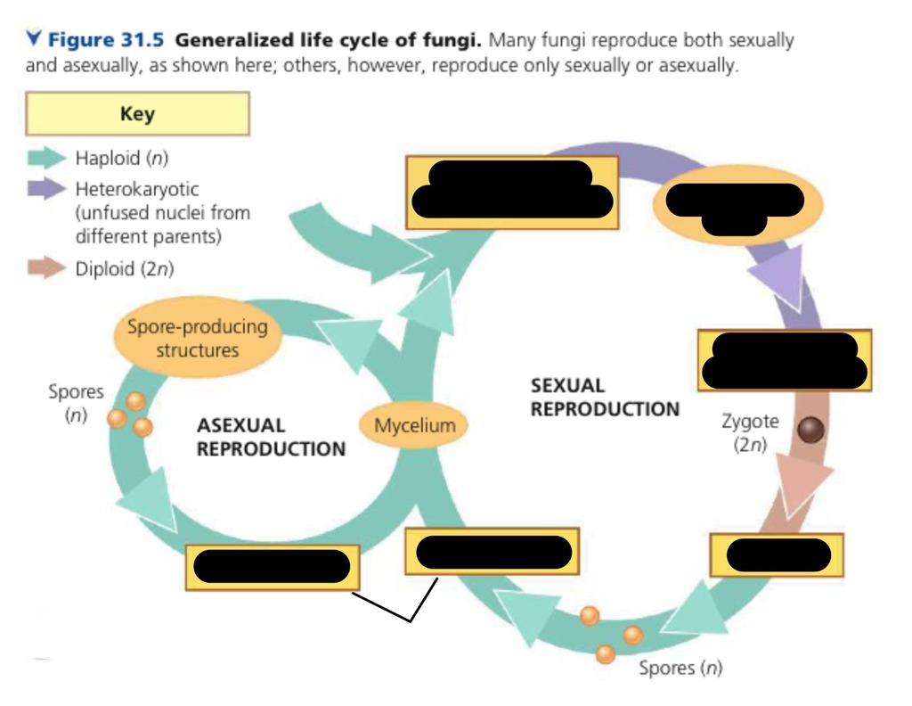 hight resolution of fungi quiz diagram