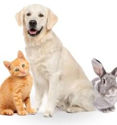 pets [ 1024 x 834 Pixel ]