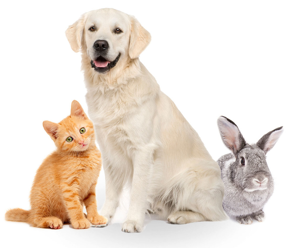 hight resolution of pets