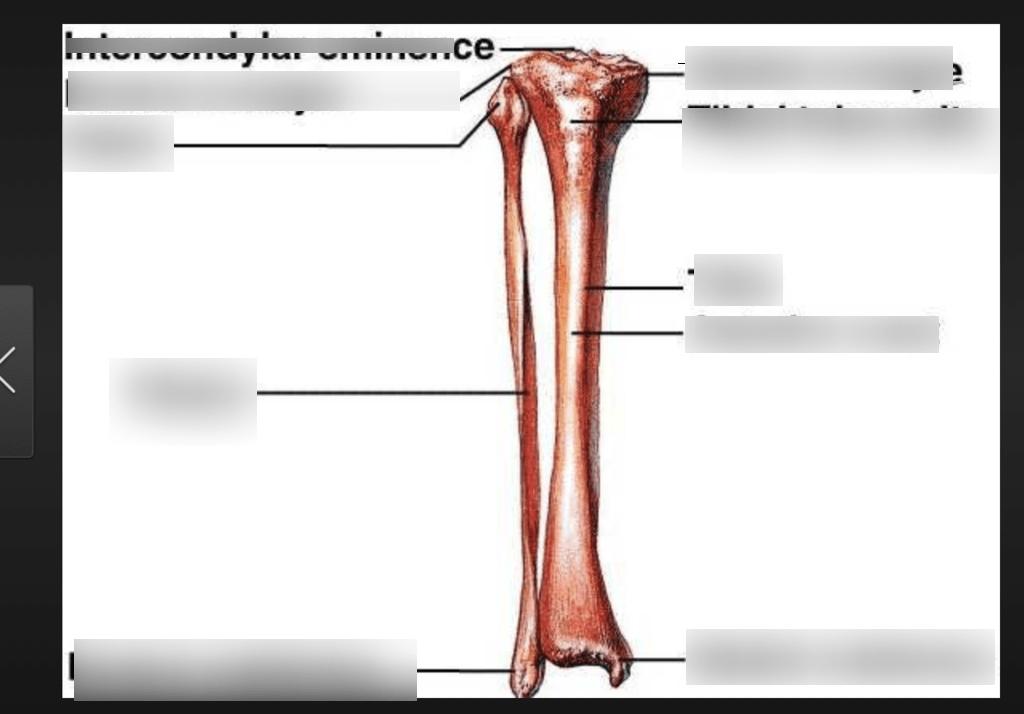 tibia and fibula blank diagram star delta wiring control all data bone markings quizlet vs