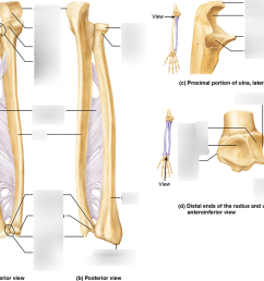 ulna diagram neck [ 1000 x 815 Pixel ]