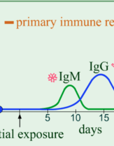 slow rise in the concentration of antibodies followed by gradual decline also biol exam mastering ch flashcards quizlet rh