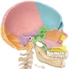 Inside Skull Diagram Well Pump Pressure Switch Wiring Anatomy Bones Of Sagittal View Quizlet Location