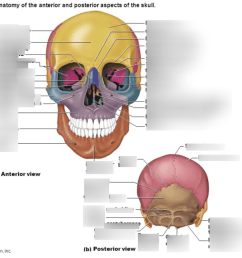anatomy skull diagram labeled [ 1024 x 769 Pixel ]