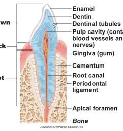 tooth pt 2 [ 1024 x 879 Pixel ]