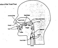 Vowel Charts (IPA)