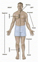Body cavities/planes/directional terms Flashcards   Quizlet