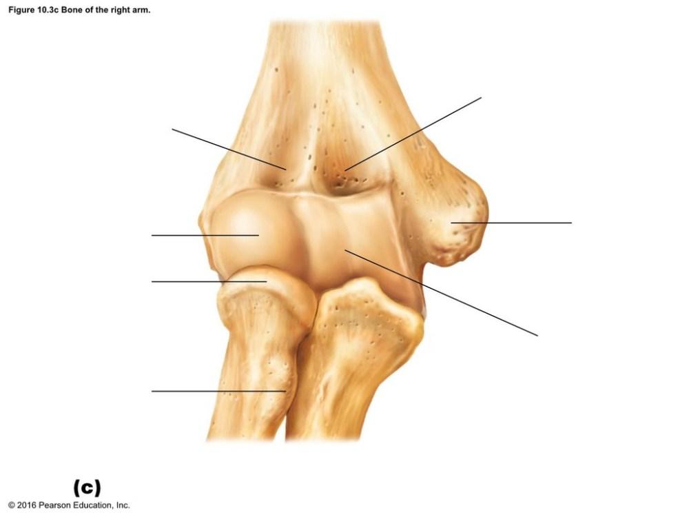 medium resolution of elbow diagram