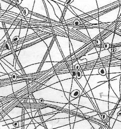 connective tissue diagram [ 1024 x 1011 Pixel ]