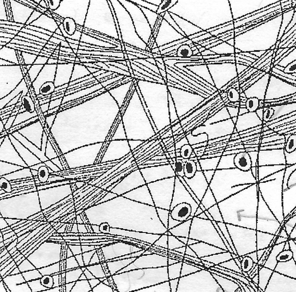 medium resolution of connective tissue diagram