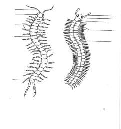 centipede diagram [ 791 x 1024 Pixel ]