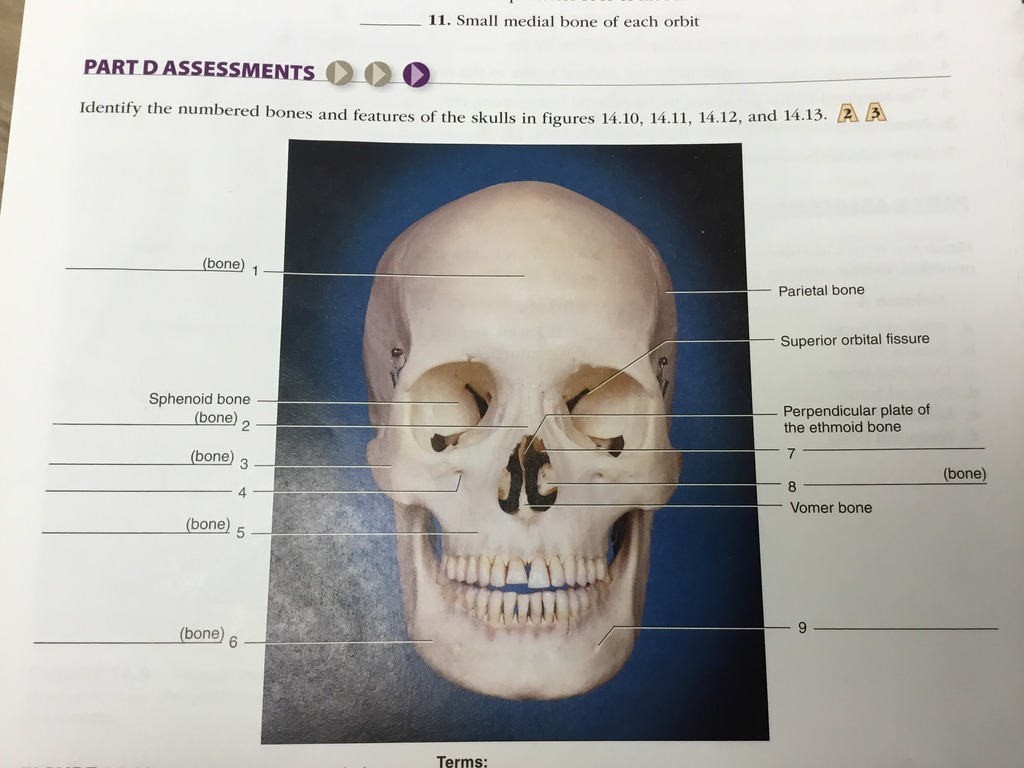 35 Label The Anterior Bones And Features Of The Skull