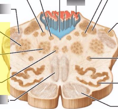 reticular formation diagram pir security light circuit quizlet location