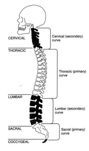 Lumbar Spine: Lumbar Spine Evaluation Form