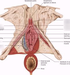 clitoris diagram [ 1024 x 885 Pixel ]