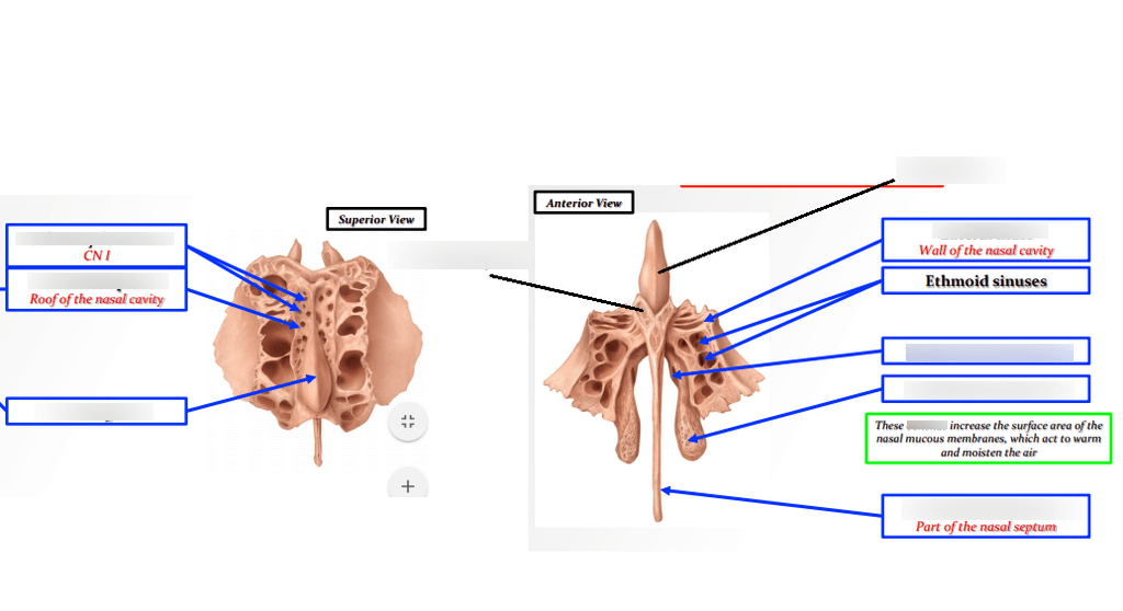 ethmoid bone diagram lucas dr2 wiper motor wiring quizlet location