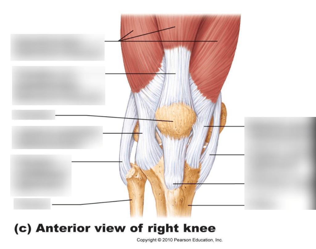 Diagram Knee Joint Label