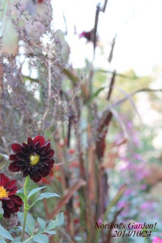 秋のバルコニーの花