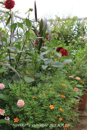 ダリア フィダルゴブラッキーと夏の花
