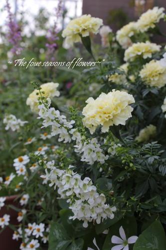 夏の白い寄せ植え