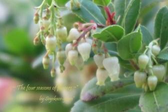 姫イチゴの木の花