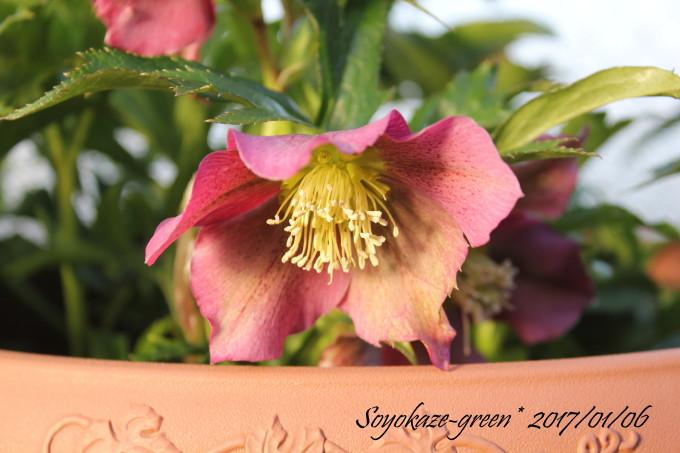 img_flower152